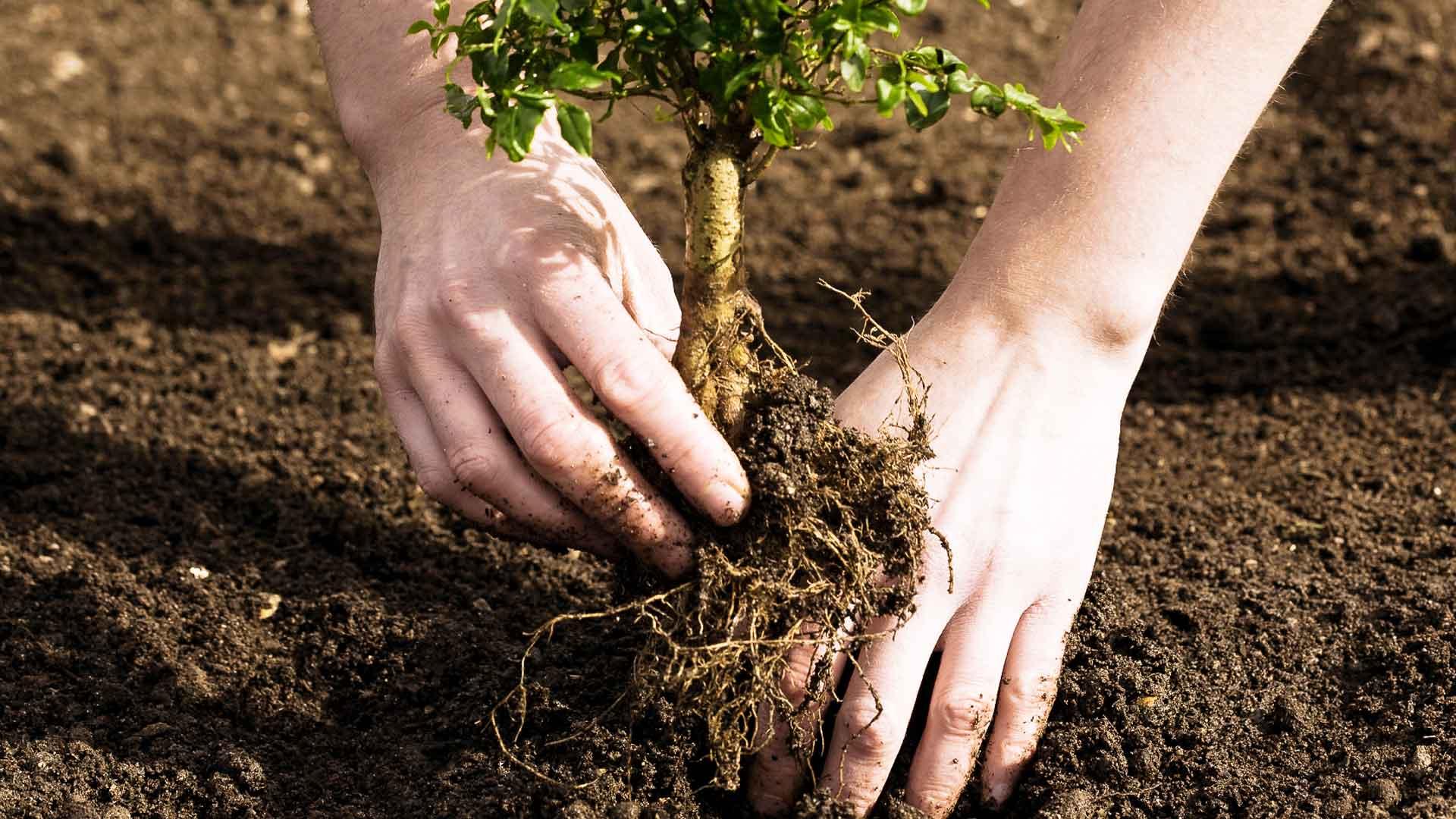 GreenShift: новая посадка деревьев